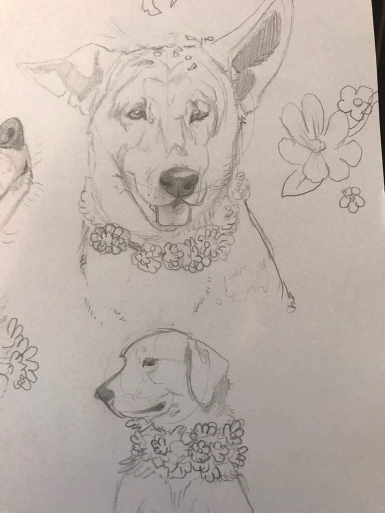 Dog Sketches Service Dogs Amino