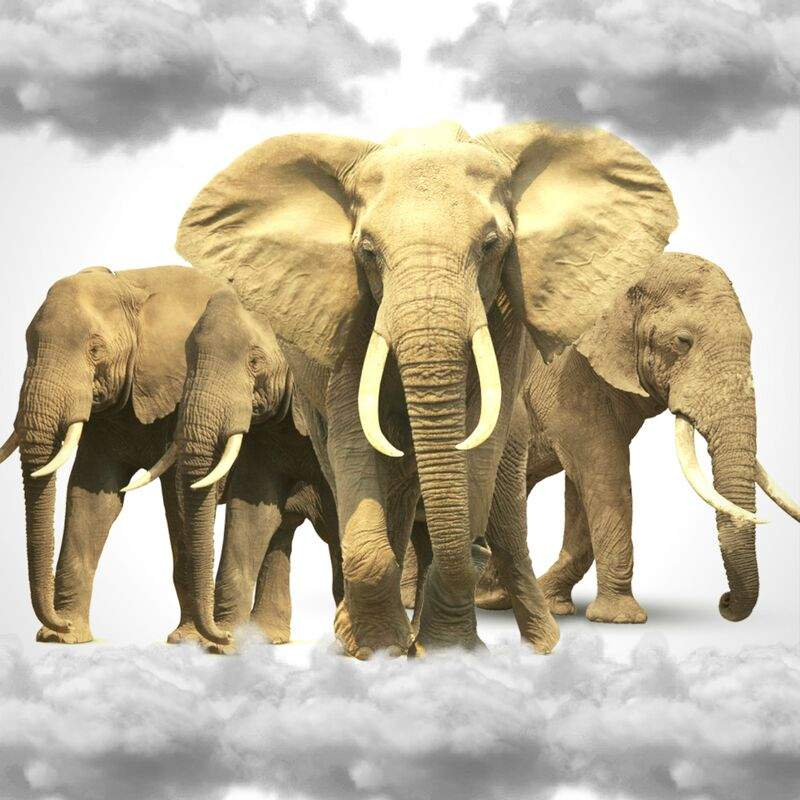 Spiritual Aspects Of Elephants Pagans Witches Amino