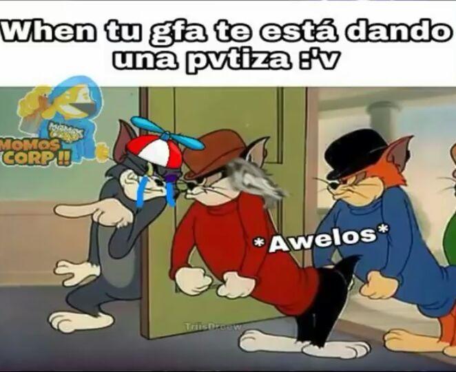 Momos Del Gato Tom U Memes Amino Español Amino