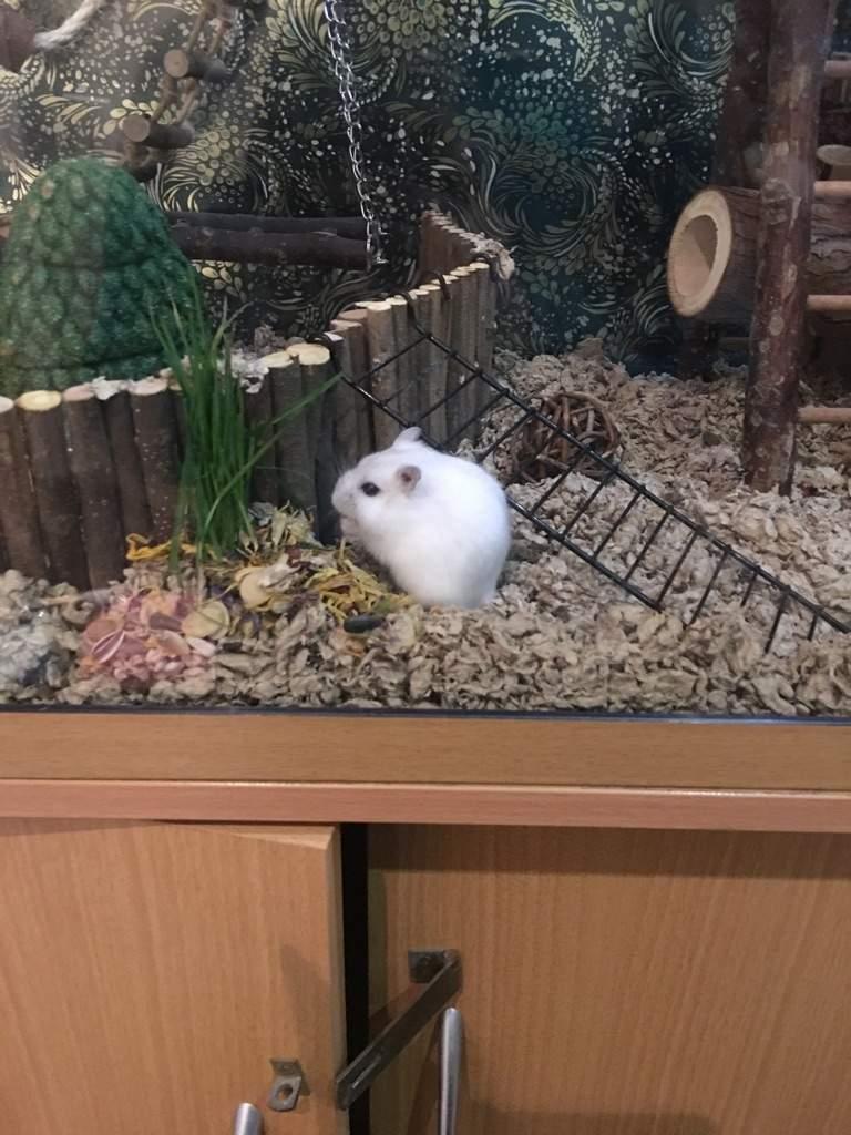 Winestone's new cage theme | Hamsters! Amino