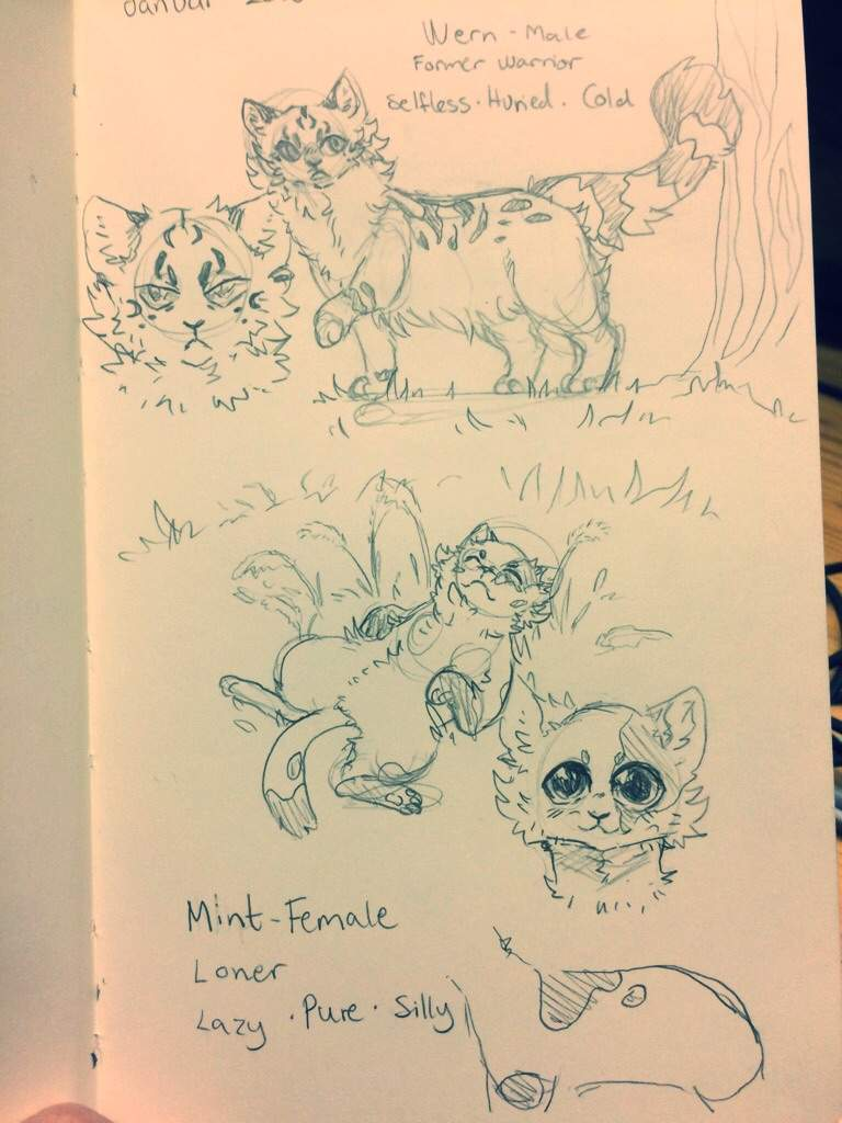 cat sketches warriors amino