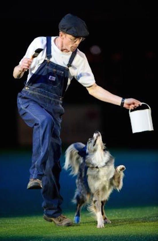 MUSICAL FREESTYLE - dog sport   Pets Amino
