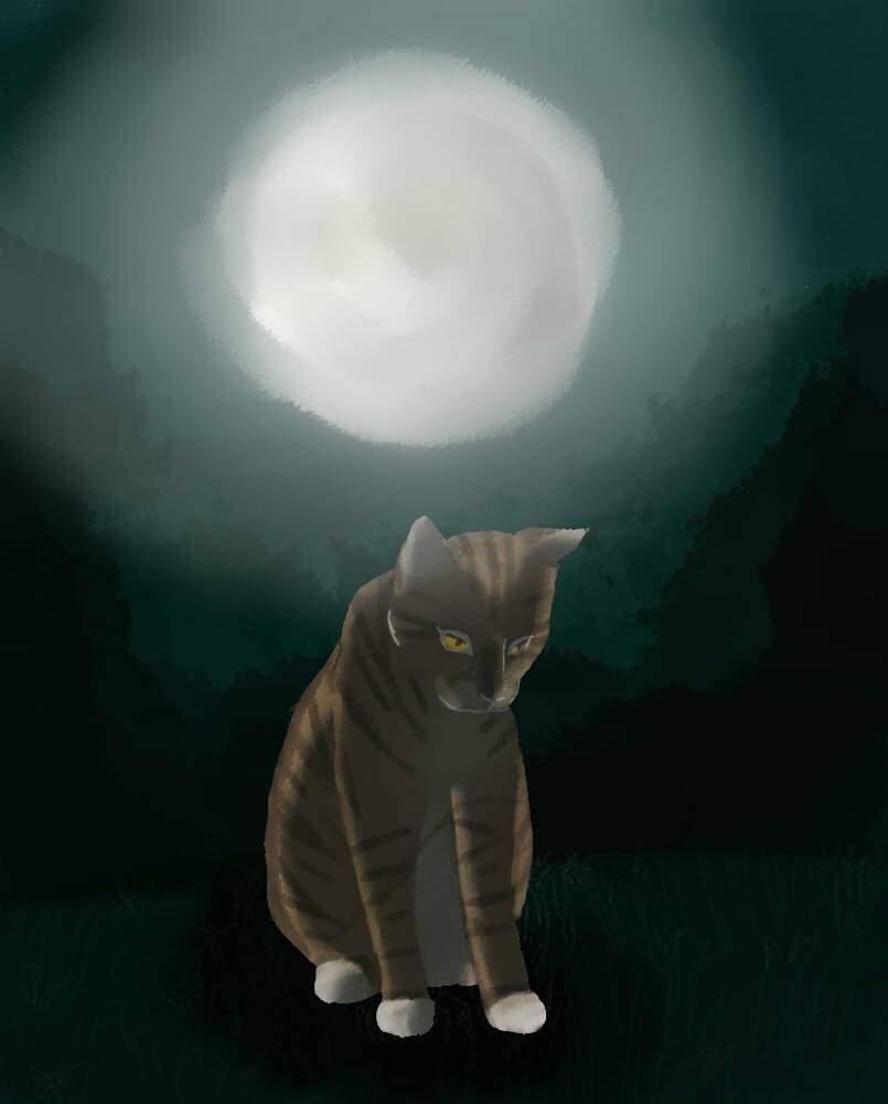 Kurzstern Meinung Und Bild Deutsche Warrior Cats Krieger Amino