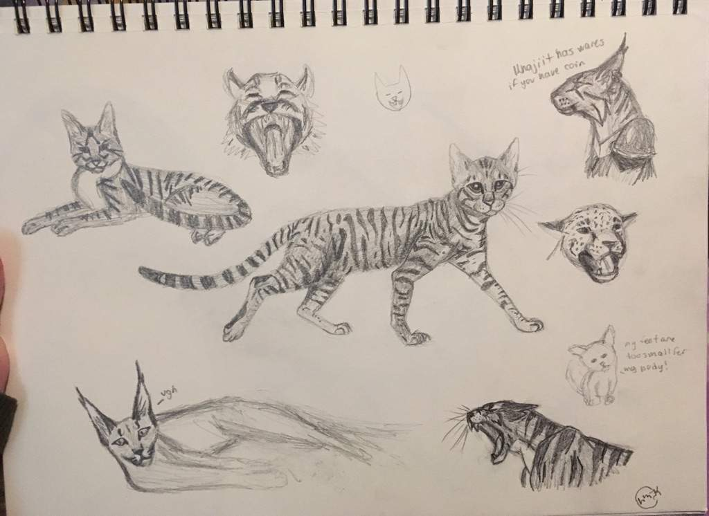 some cat sketches warriors amino