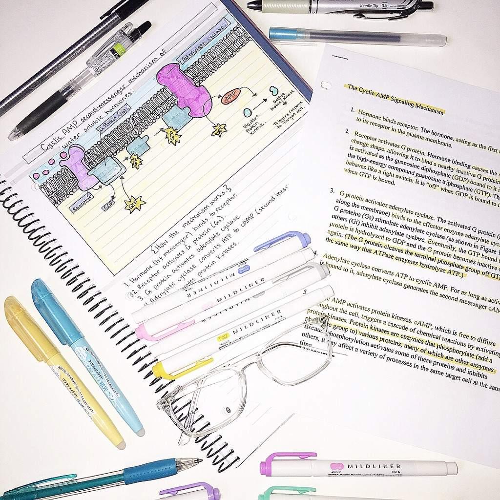 Anatomy and Physiology. | Studying Amino Amino