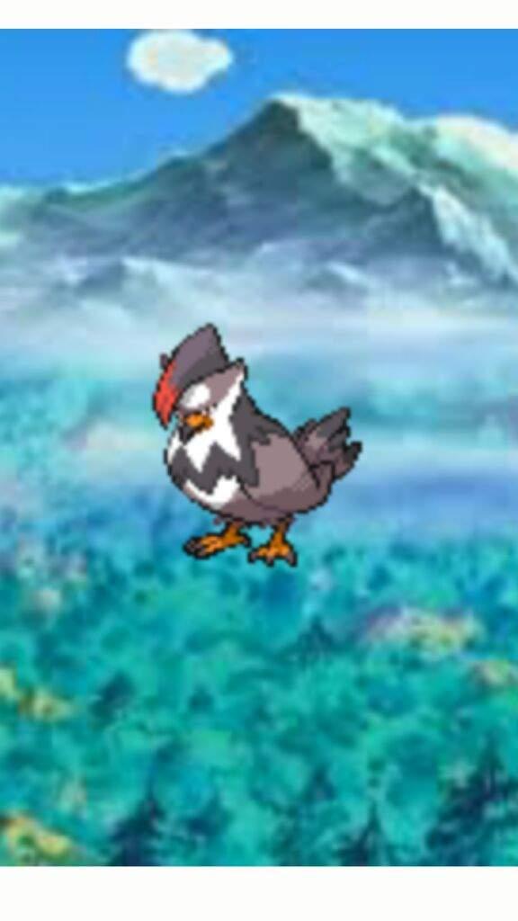 Dapokebros Top 5 Fave Pokemon Pokémon Amino