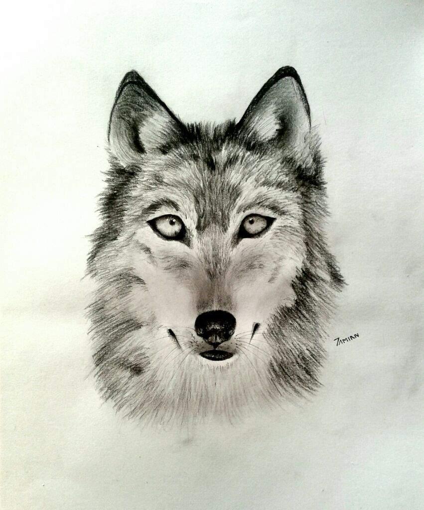 Dibujo Realista De Un Super Lobo Mipropioarte Dibujarte Amino