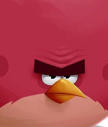 Terrence Wiki Angry Birds Fans Amino Amino