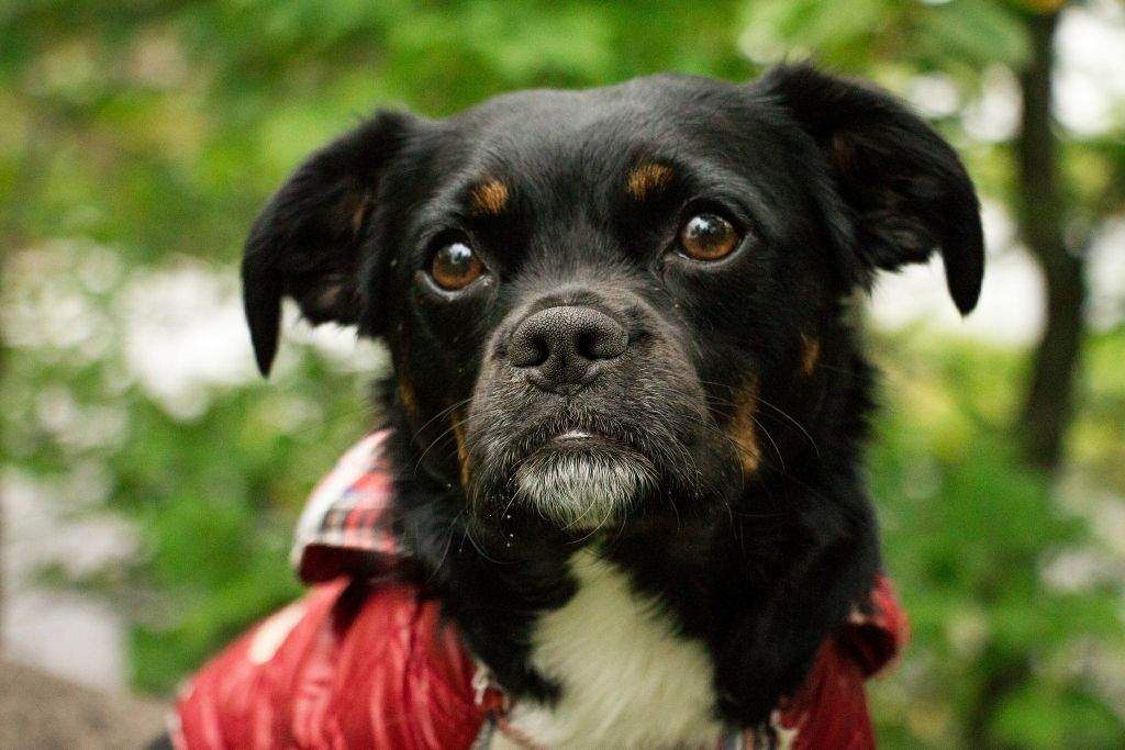 see my sad face dogs amino