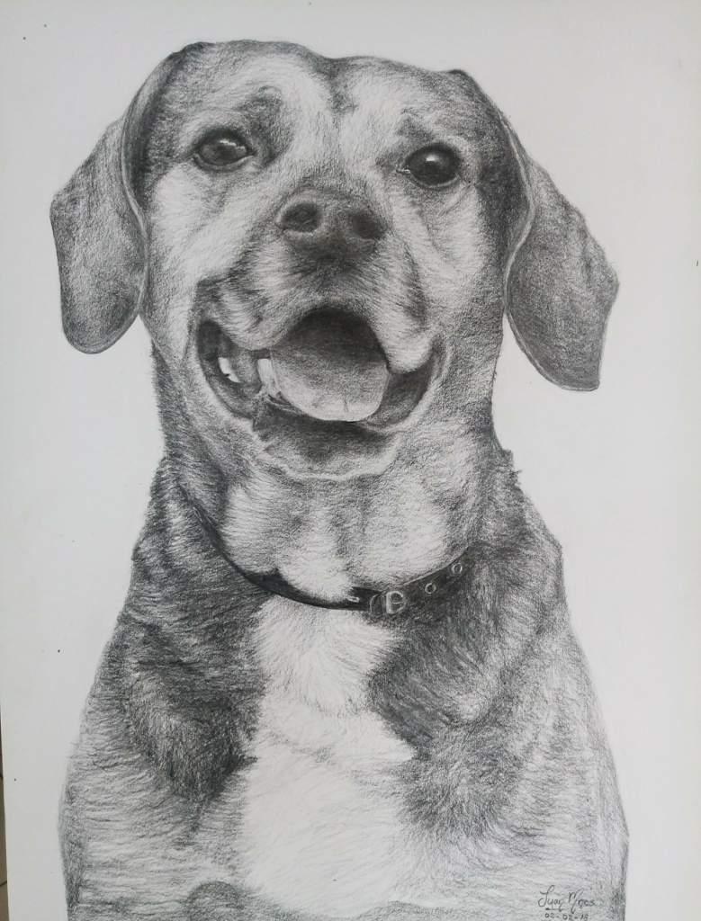 Como Dibujar Un Perro Con Lapiz Carboncillo Dibujarte Amino