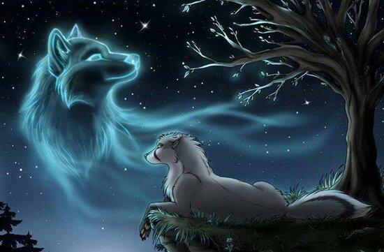 Hermosos Lobos Buscando Amigos Y Pareja Amino