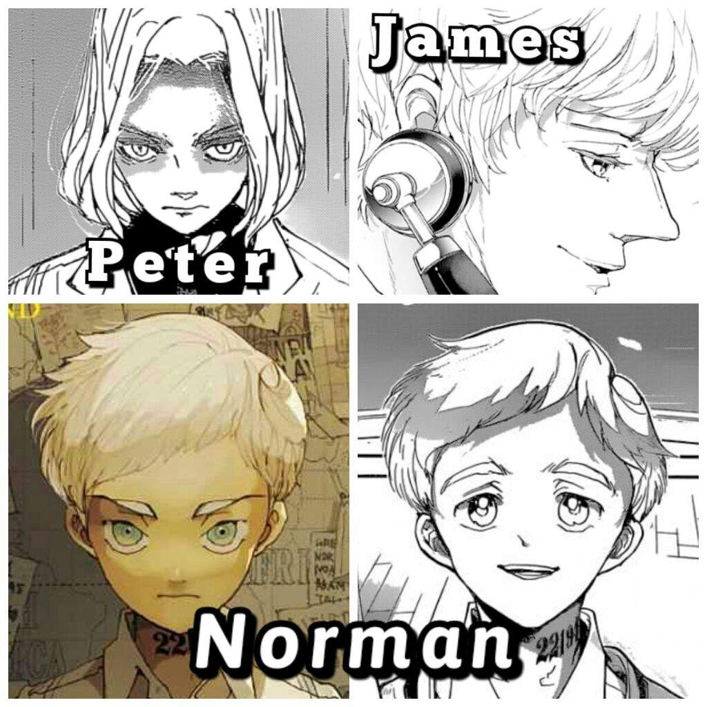 The Norman theories (The Promised Neverland) | Anime Amino