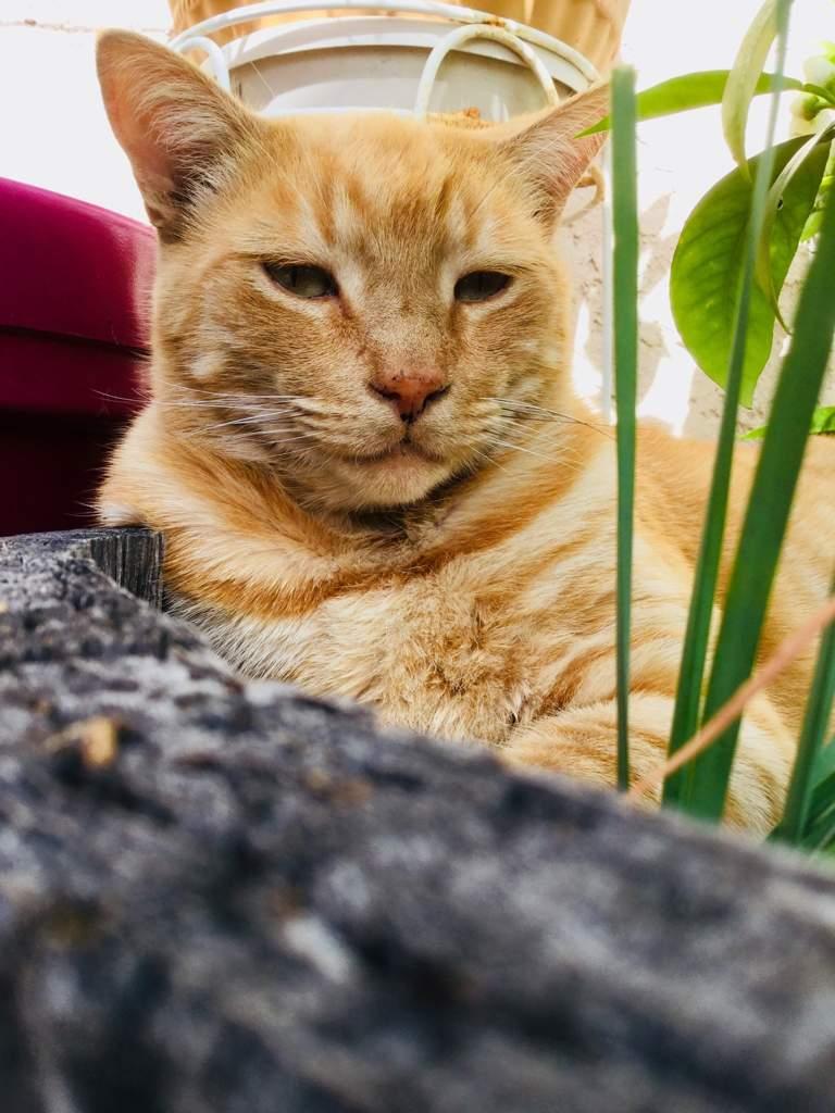 My Cats Photoshoot Weirdos Amino