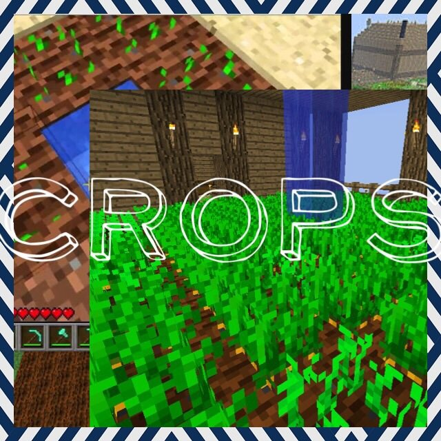 Crop Spotlight Potatoes And Beetroot Minecraft Amino