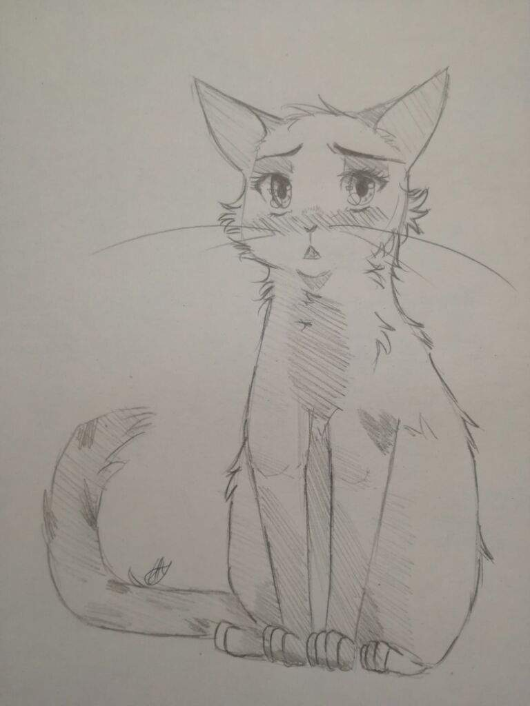 Skizzen übungen German Warrior Cats Amino