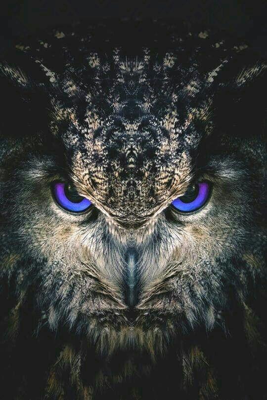 El Búho Como Totém Wicca Y Paganismo Amino