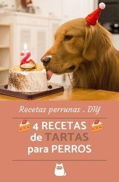 4 Recetas Para Hacer Un Pastel De Cumpleaños A Tu Perro