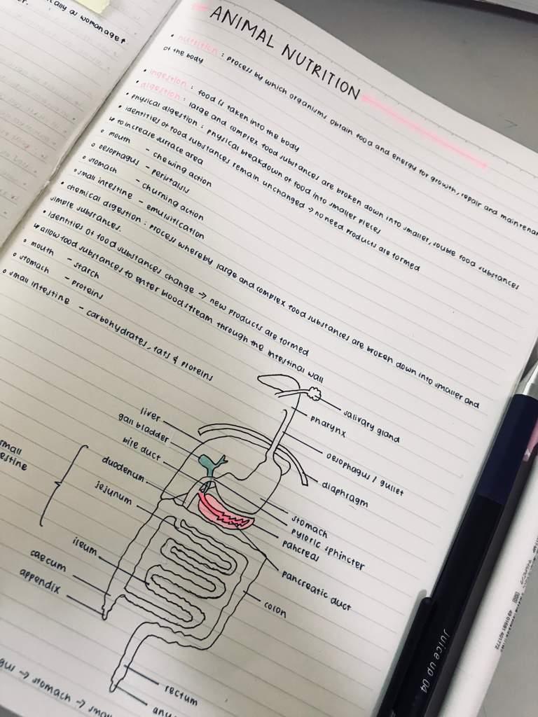 Bio notes | Studying Amino Amino