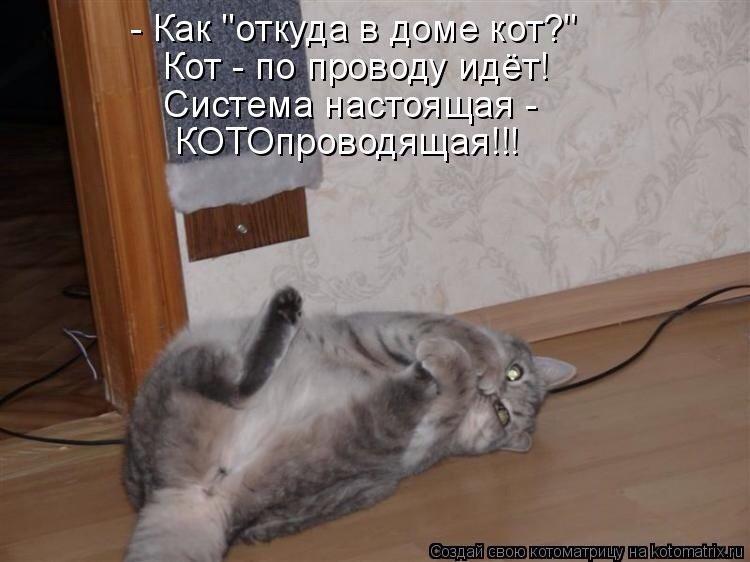 Открытки, картинки коты приколы читать