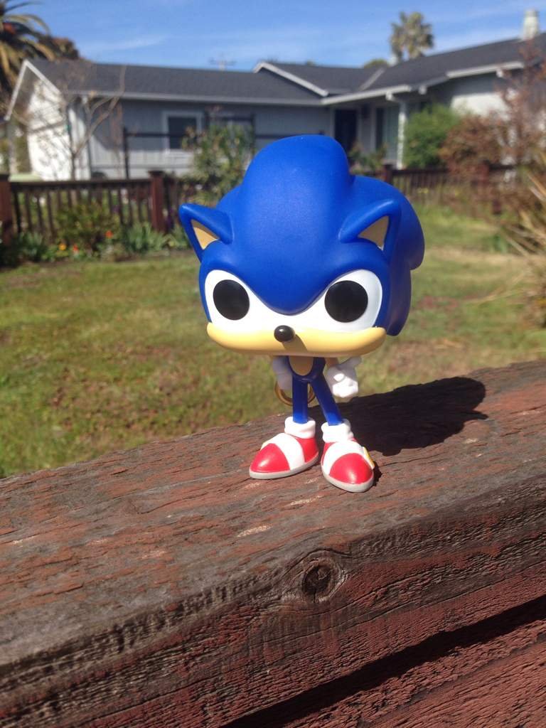 Sonic In Real Life Sorta Sonic The Hedgehog Amino