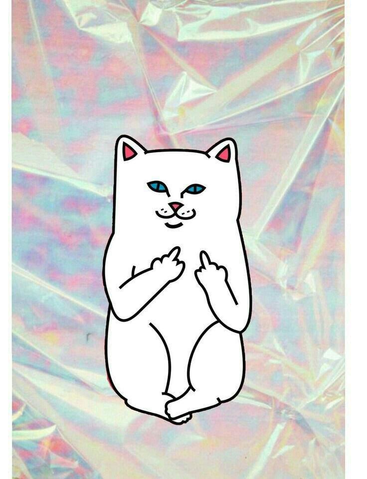 Кот показывает факью картинки в космосе картинки на телефон