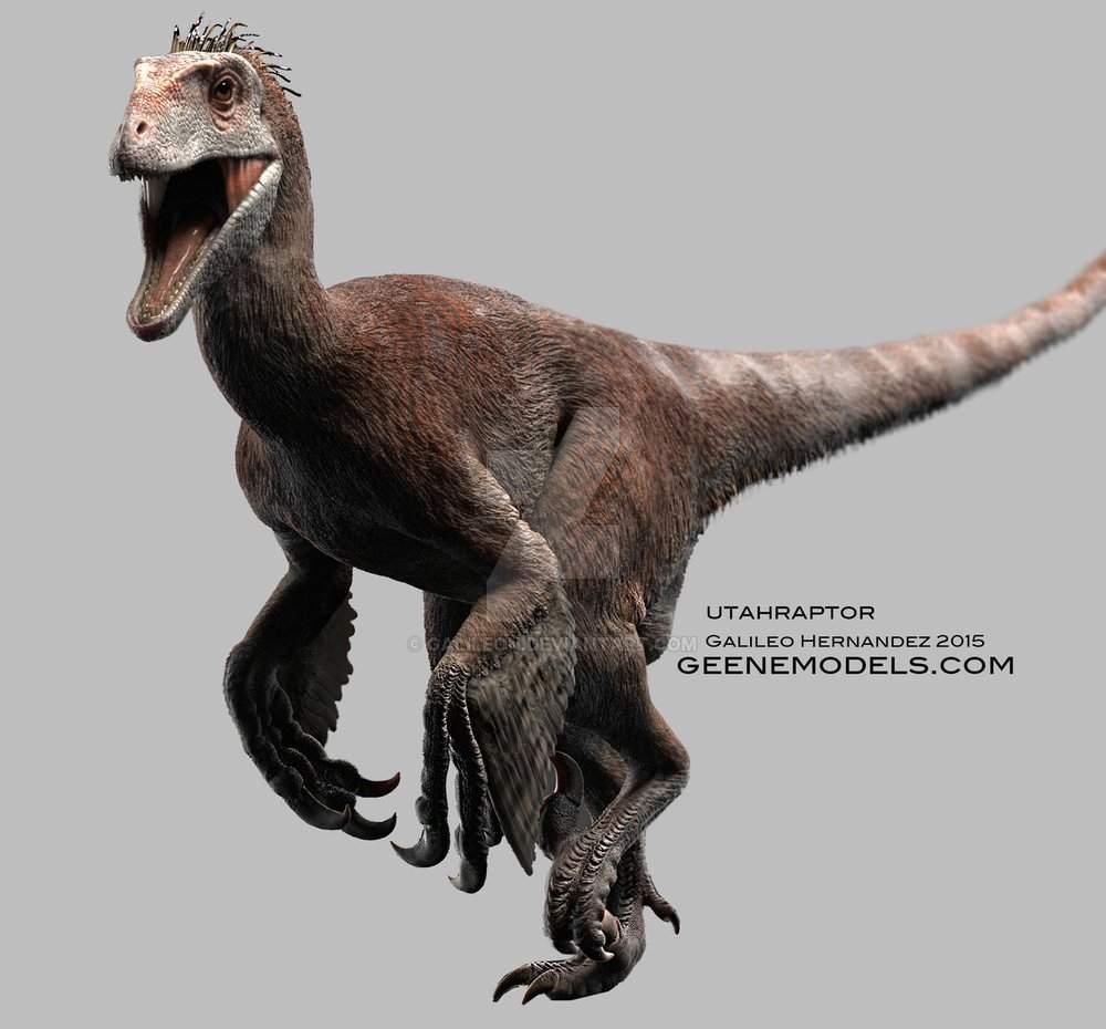 Utahraptor Wiki Dinosaurios Abriendose Camino Amino Utahraptor (meaning utah's predator) is a genus of large dromaeosaurid dinosaur that lived in north america during the early cretaceous period. utahraptor wiki dinosaurios