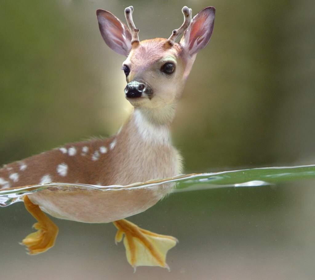 cursed images of animals | Dank Memes Amino