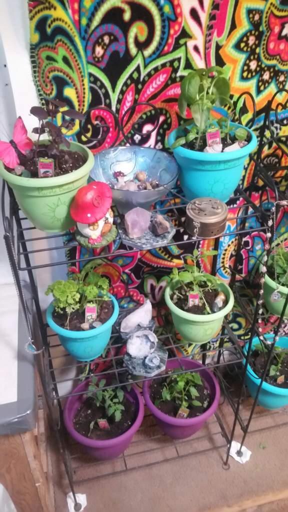 Indoor herb garden | Pagans & Witches Amino