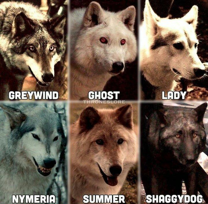 Image of all six Stark direwolves.