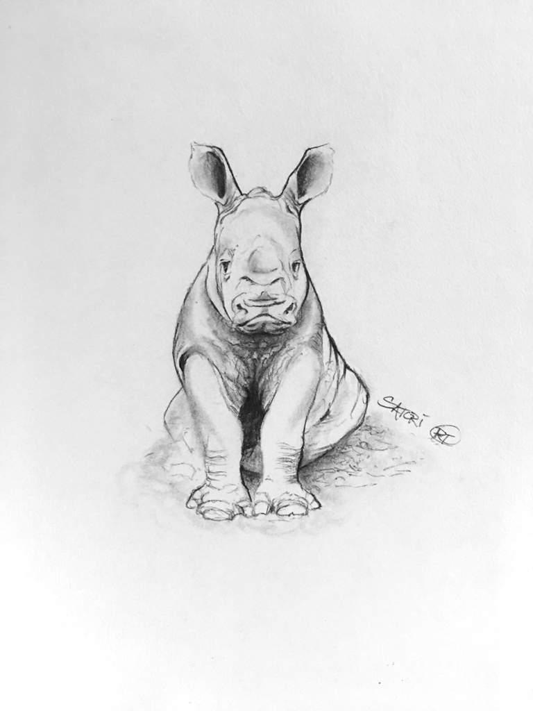 Baby rhino pencil sketch