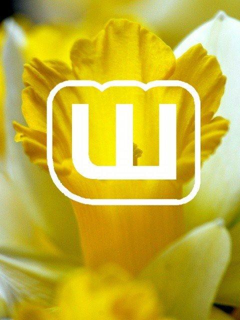 Wa Spring Aesthetic 3 3 Wattpad Amino