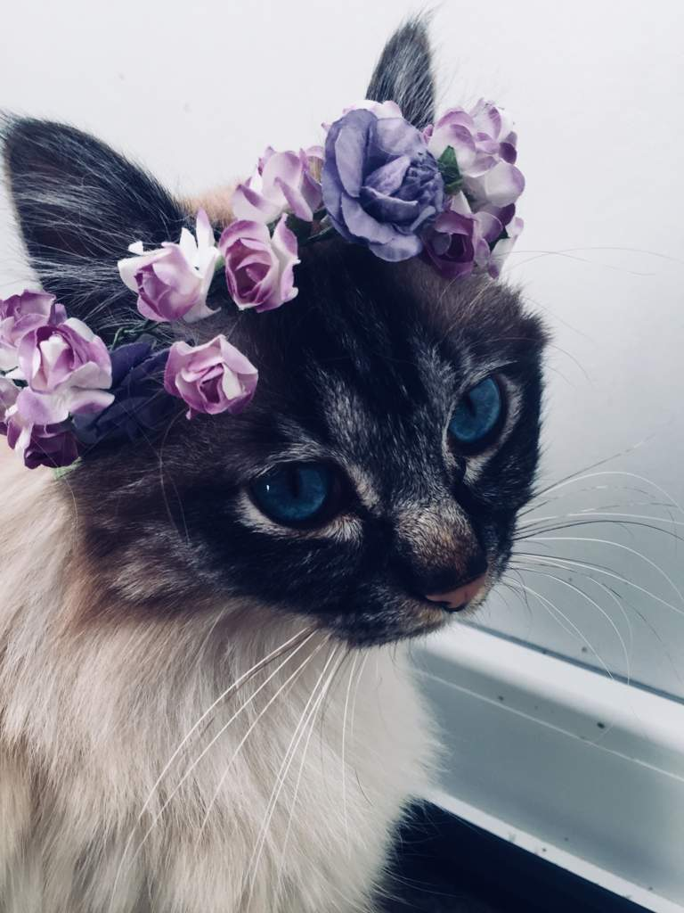 Flowercrown 20 Cats Amino