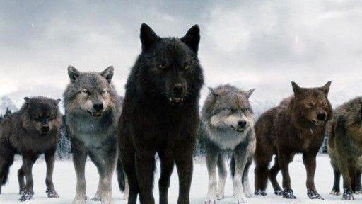 Jacob Black | Wiki | The Twilight Saga Amino