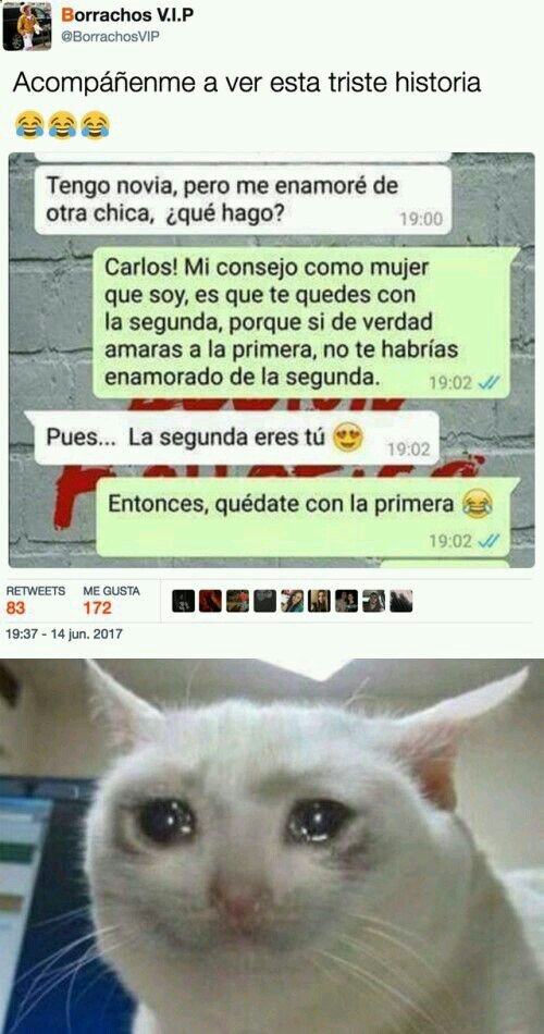 El Gato V Meme Amino