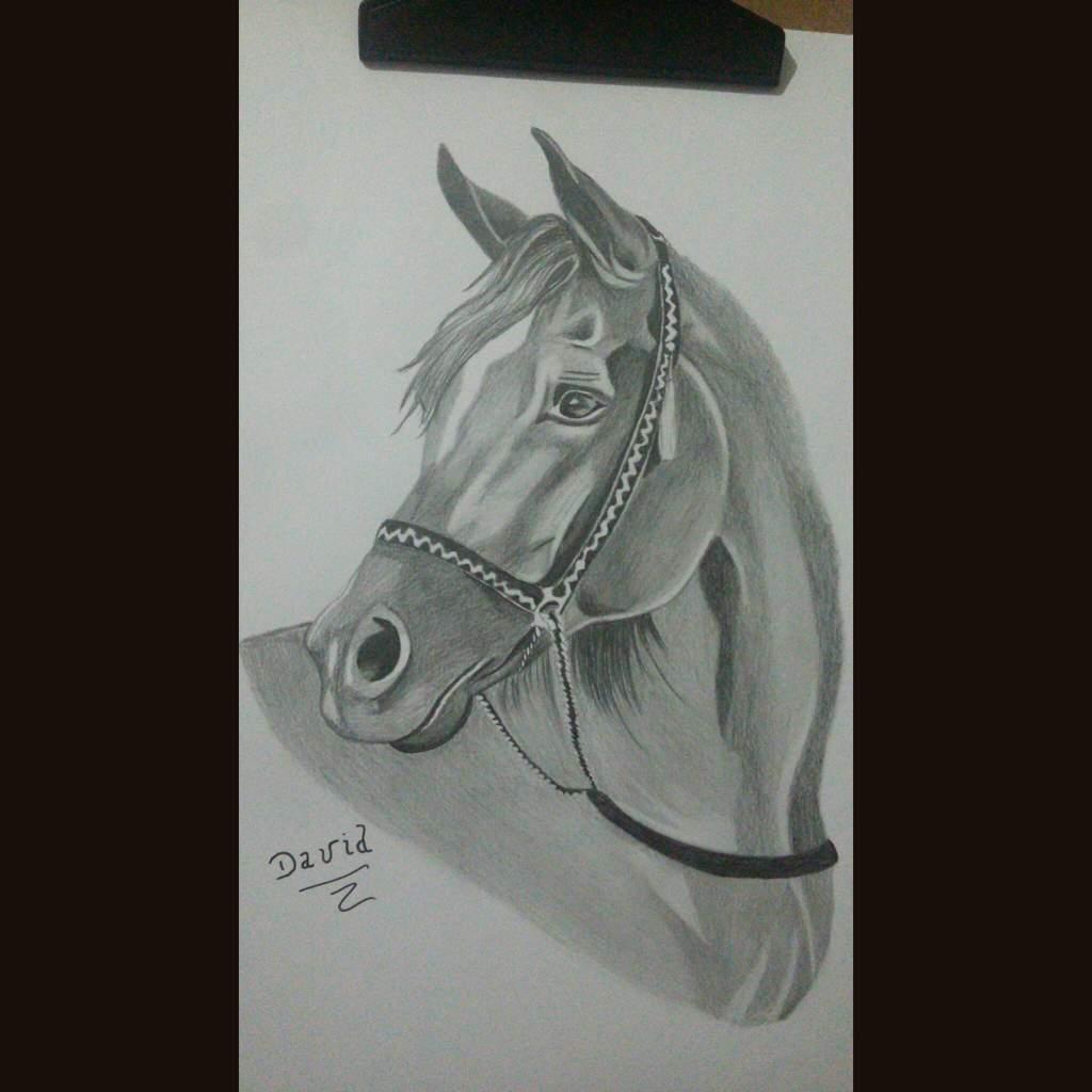Cavalo Realista Feito Este Ano Desenhistas Do Amino Amino