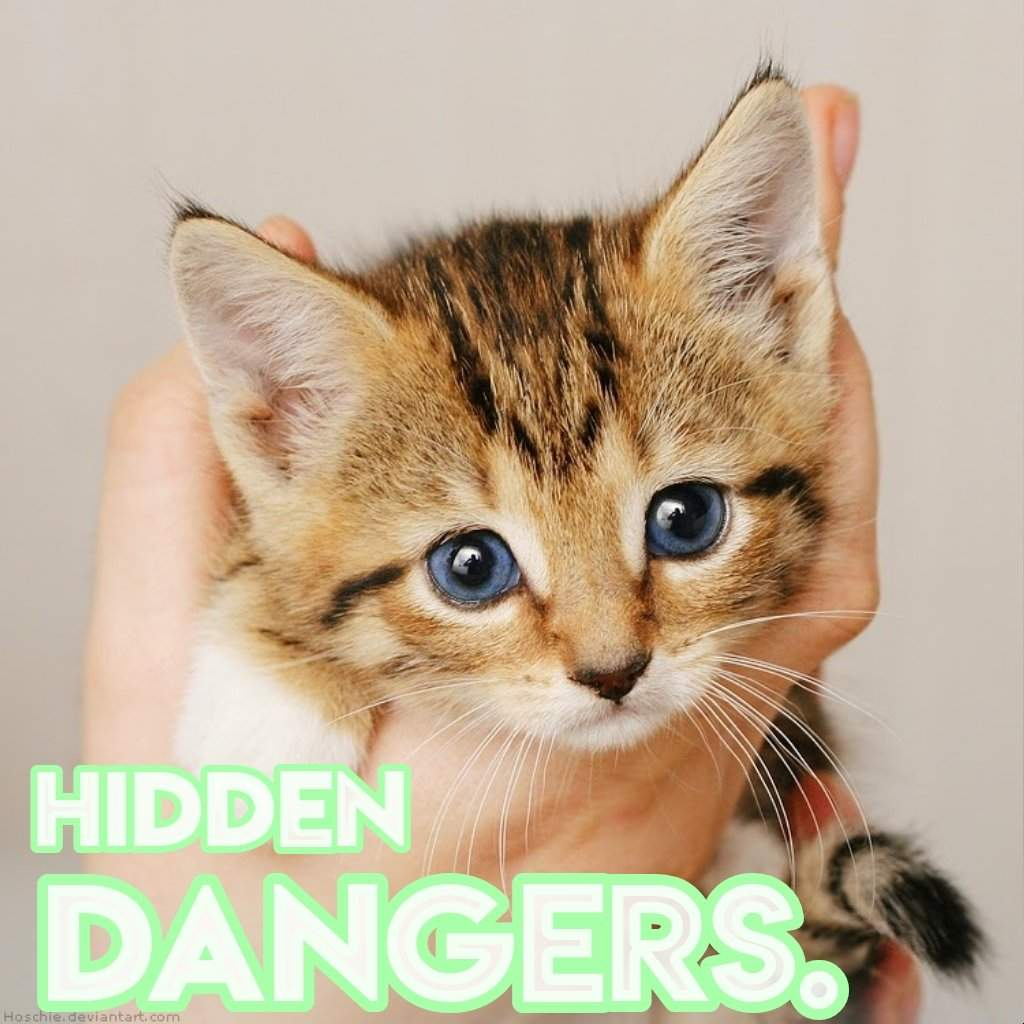 Hidden Dangers To Cats   CW   Cats Amino