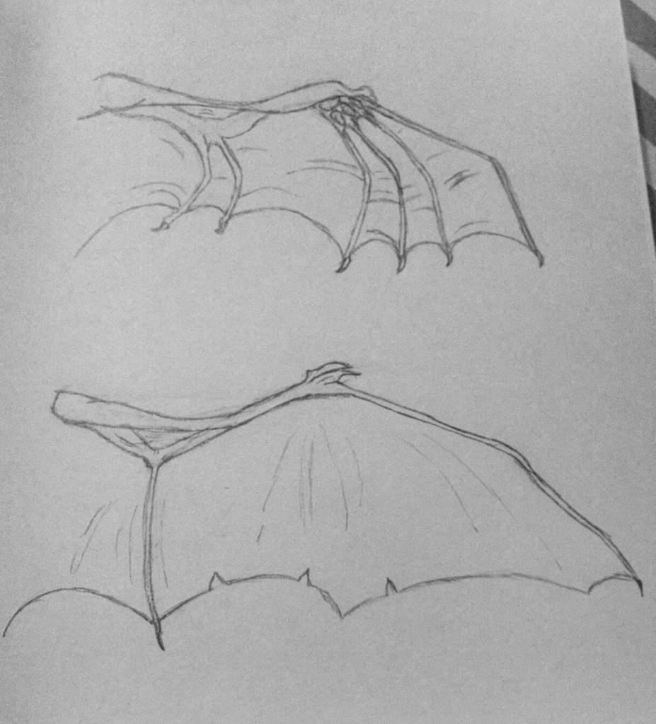 Dragon Anatomy: Wings   Art Amino