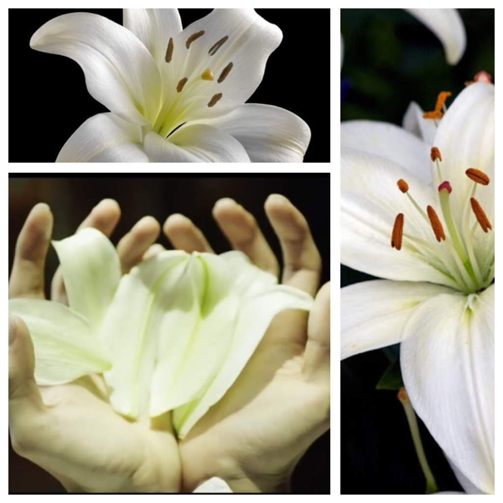 The secret of the white lily bts love yourself theory armys amino todays theoryanalysis will decode the hidden meaning behind this flower its symbolism and its attachment to the story line of love yourself izmirmasajfo