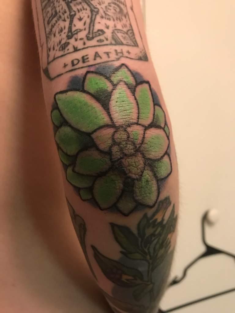 Succulent elbow tattoo amino izmirmasajfo