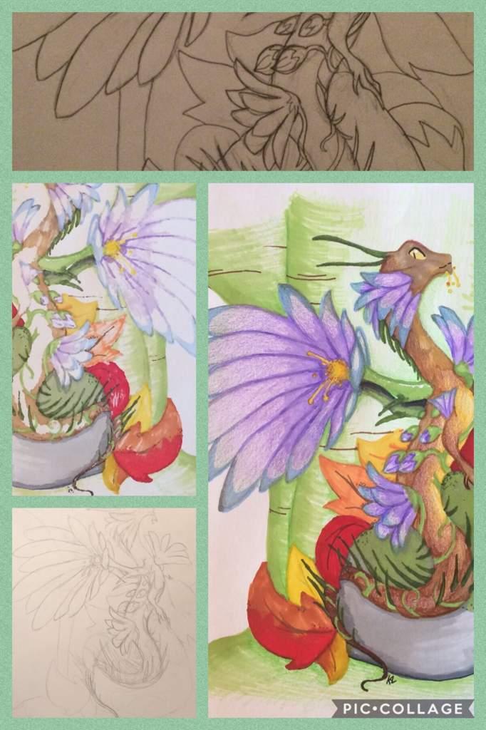 Ddd Definate Dragon Drawer Dragons Amino