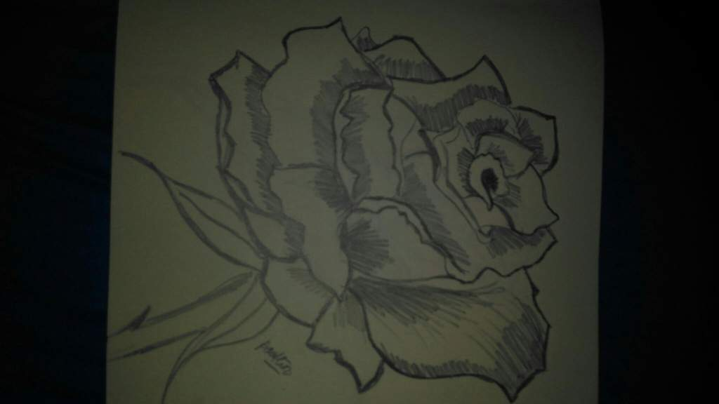 Simple Line Art Rose : Simple pencil sketch rose done by me art amino