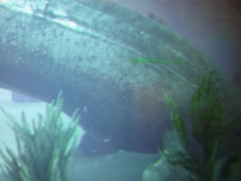 Look What I Just Found In A Lake A Leedsichthys It S Rare Ark Survival Evolved Amino