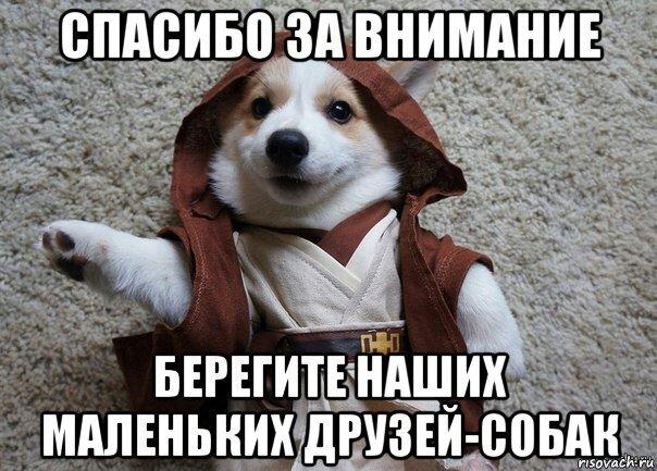картинка собаки спасибо за внимание доступны