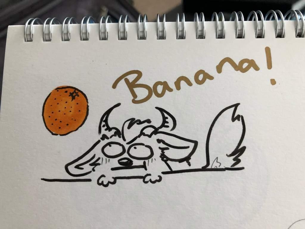 Sketch book insanity   Furry Amino