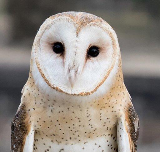 owls harry potter amino