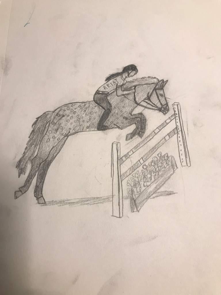 Horse Jumping Drawing Equestrian Amino
