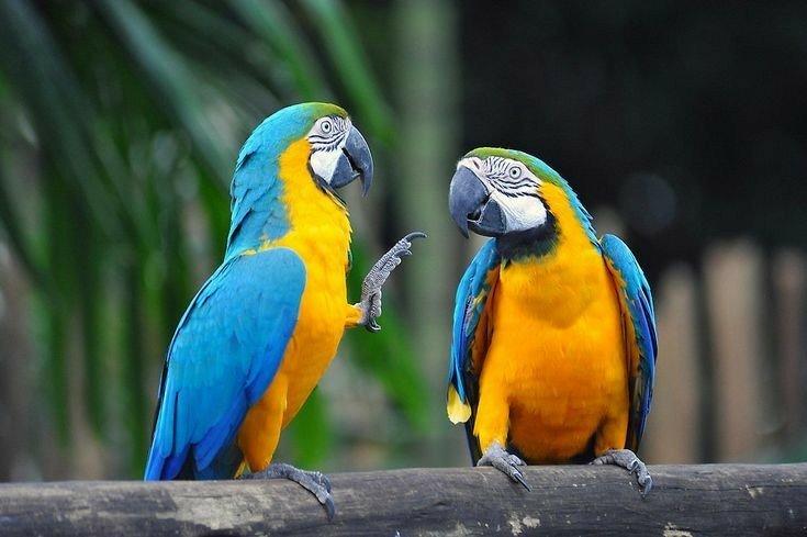 Image result for macaw lifespan