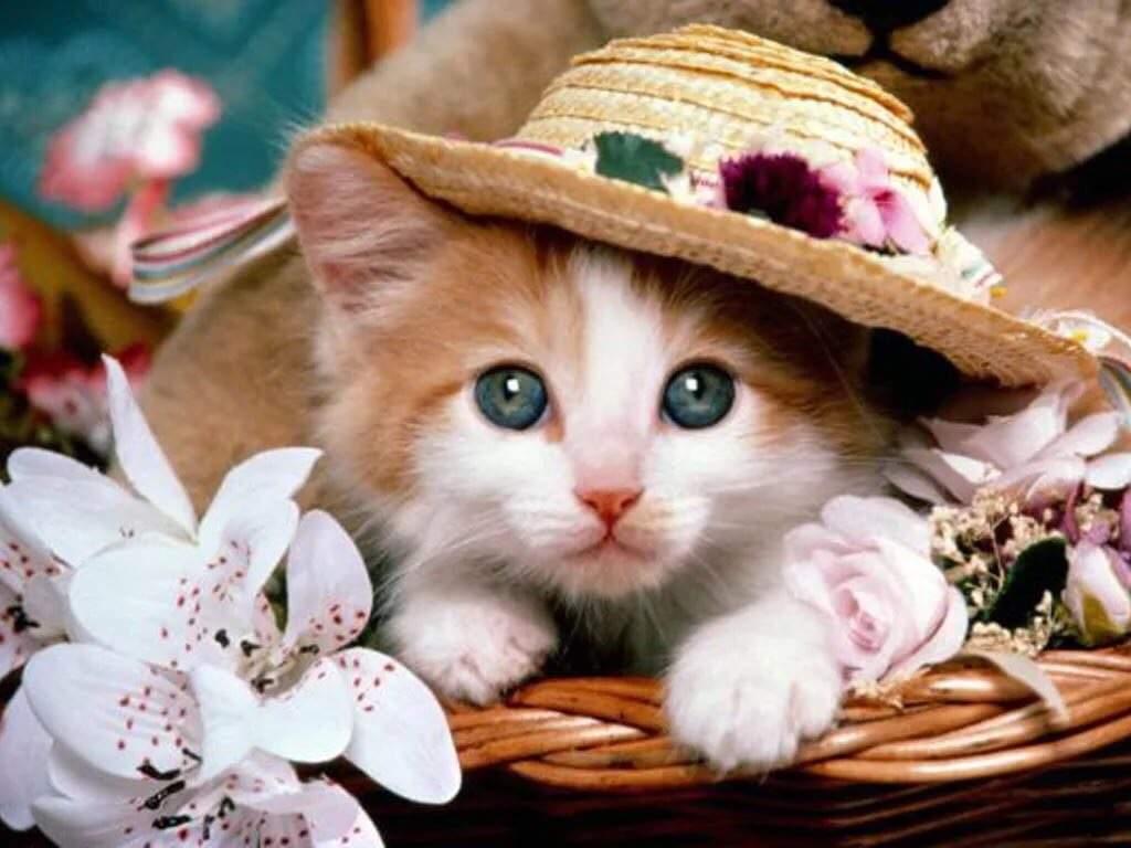 Открыток, картинка про кошек