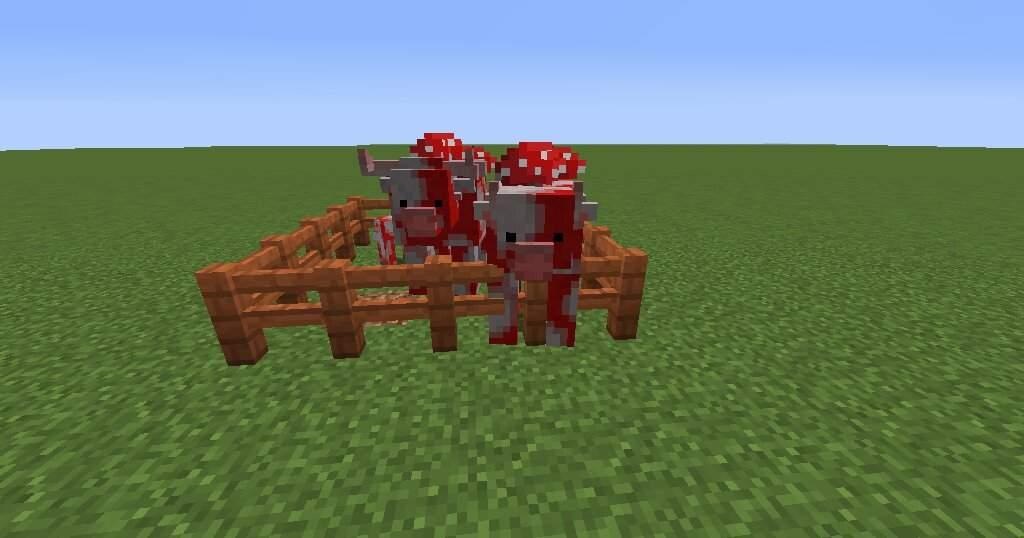 Animania Sheep