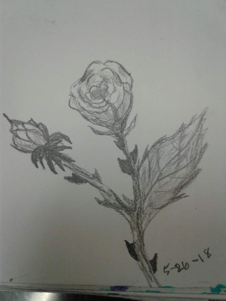 i always thought i couldn t draw a rose but now i m forcing the